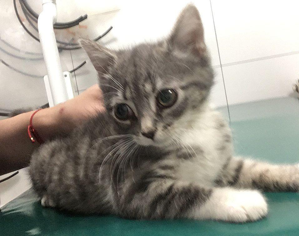 Ilustracja do informacji: Uwaga: Szukamy domu dla kotki