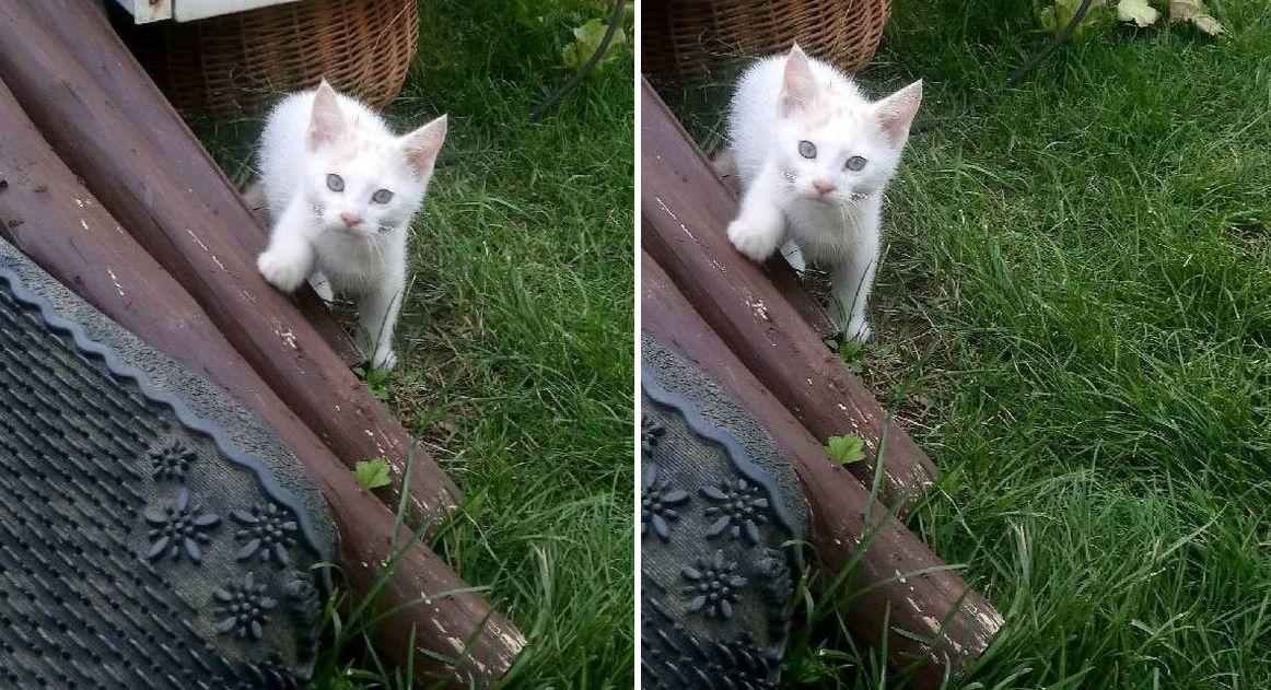 Ilustracja do informacji: Kotki-słodziaki szukają domu