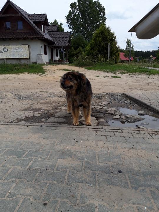 Ilustracja do informacji: W Bobowicku błąka się pies. Może Twój?