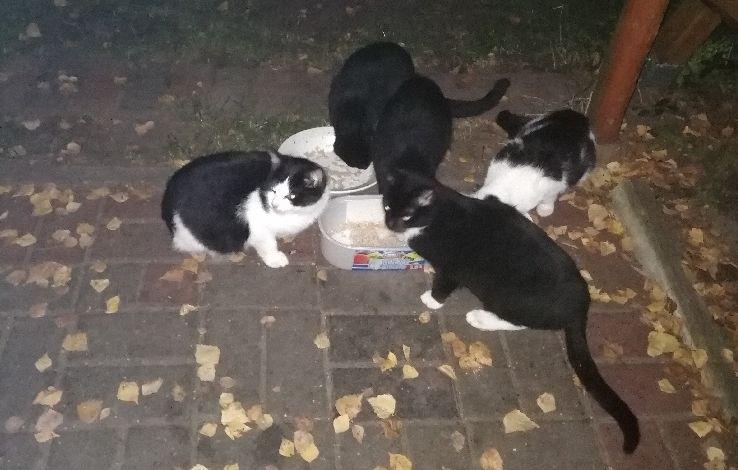 Ilustracja do informacji: Szukamy domu dla słodziaków-kociaków