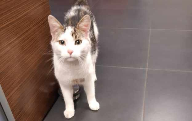 Ilustracja do informacji: Uwaga: Szukamy właściciela kotka