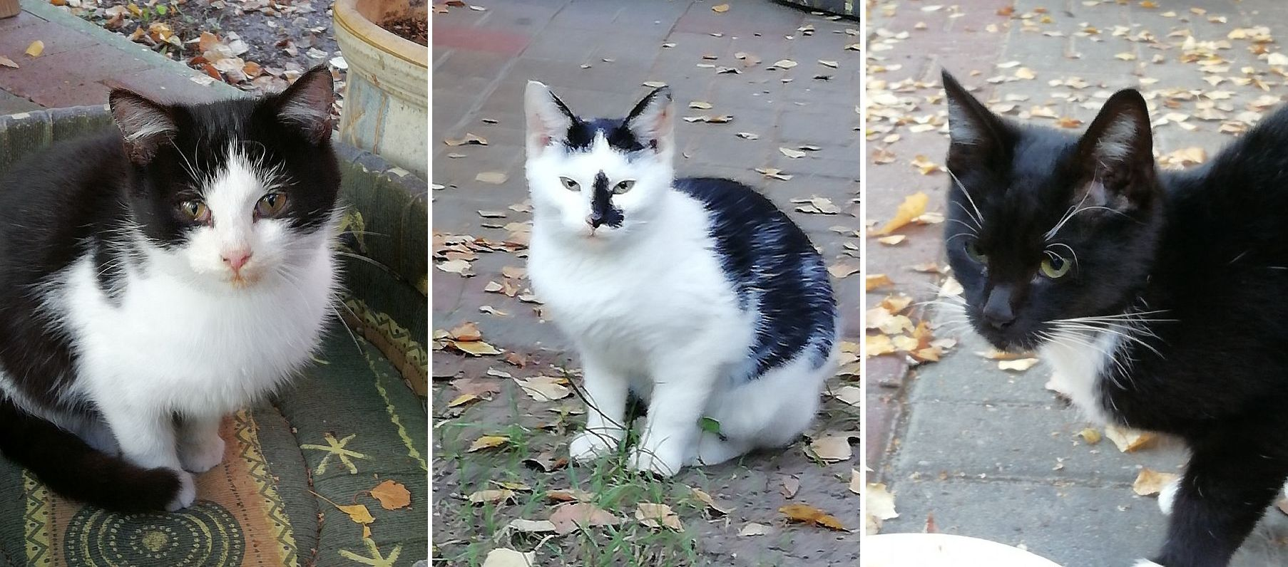 Ilustracja do informacji: Trzy śliczne kotki czekają na opiekunów