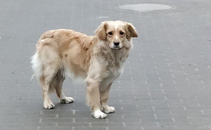 Ilustracja do informacji: W Gorzycy błąka się pies. Może Twój?
