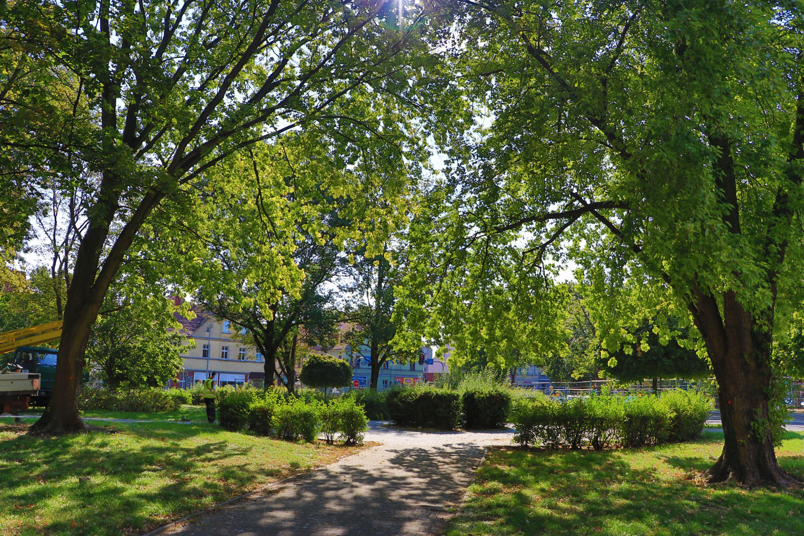 Ilustracja do informacji: Wiosną miasto zazieleni się i zakwitnie